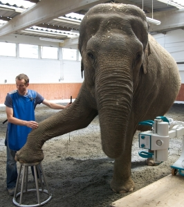 01-5-elephant.jpg