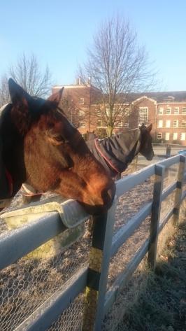 01-6-frosty-horse 6.jpg