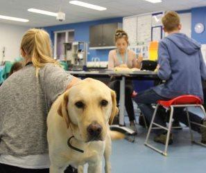 06-2a-clin-skills-dog.jpg