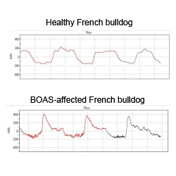 WBBP trace samples of a healthy and a BOAS-affected French bulldog