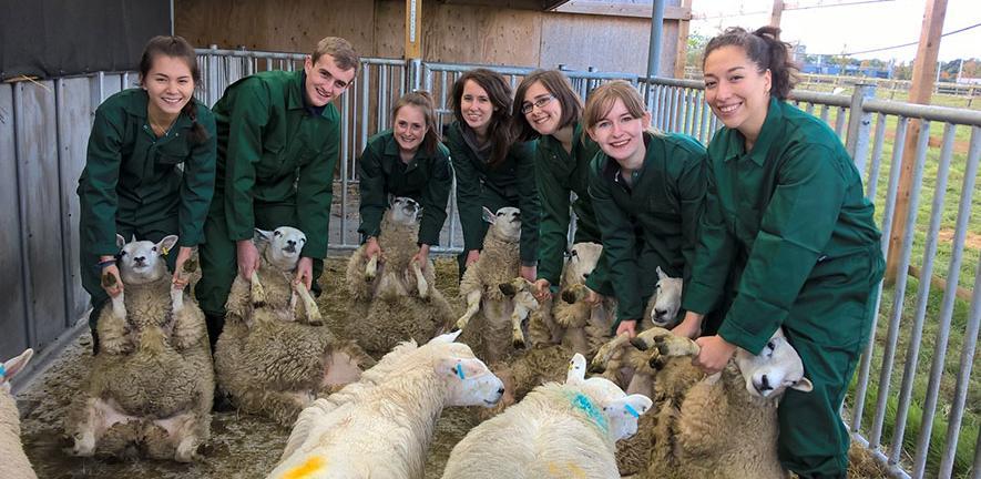 students lamb